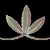 Best Naturals CoQ10 200 mg 120 Capsules